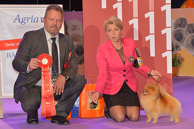 FCI group V - Winners of the International Dog Show «Hundmässa 2015» (Stockholm, Sweden), 12-13 December 2015 (BIS photo)