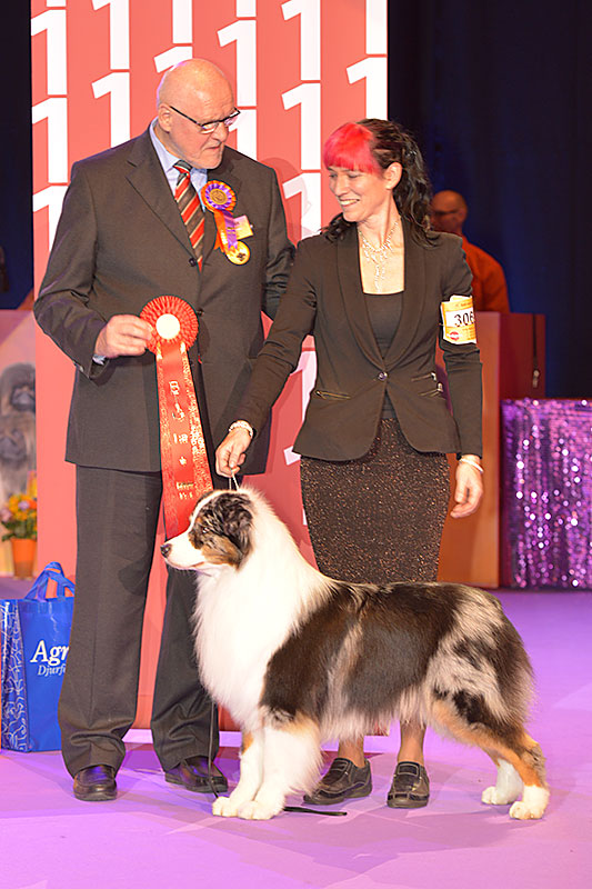 FCI group I - Winners of the International Dog Show «Hundmässa 2015» (Stockholm, Sweden), 12-13 December 2015 (BIS photo)
