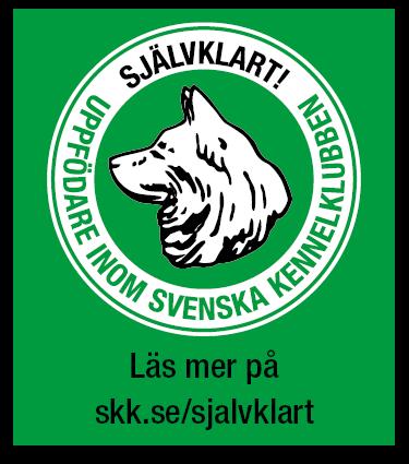 Banner liten grön bakgrund