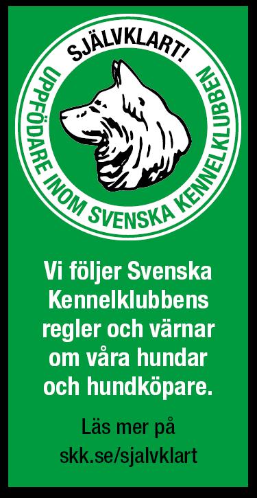 Banner stående grön bakgrund