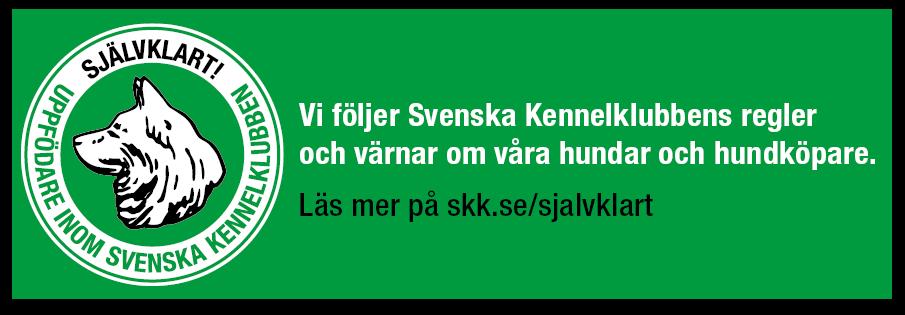 Banner liggande grön bakgrund