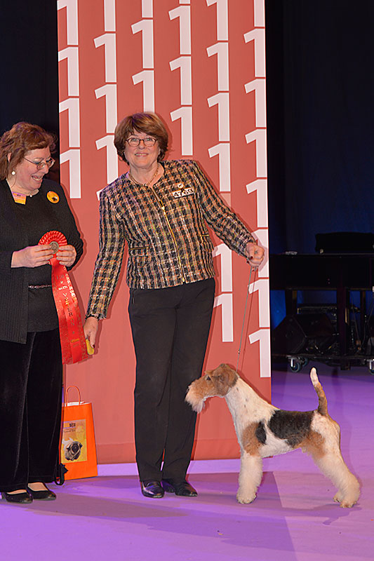 Best Veteran (Sunday, 13 December 2015) - Winners of the International Dog Show «Hundmässa 2015» (Stockholm, Sweden), 12-13 December 2015 (BIS photo)