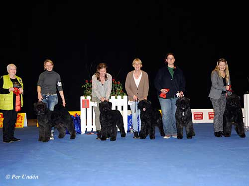 Best Breeding Group, 29 March 2015, Sunday - Winners of the International Dog Show Malmö (Sweden) 28-29 March 2015