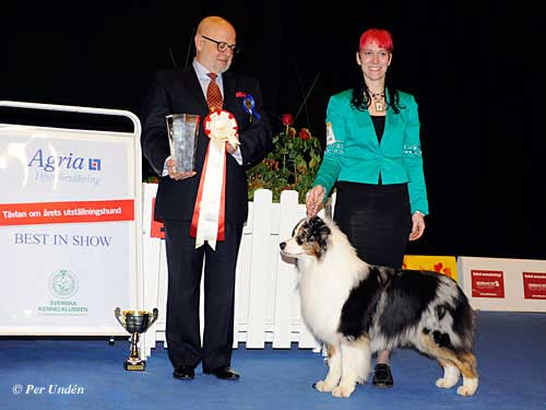 FCI group I - Winners of the International Dog Show Malmö (Sweden) 28-29 March 2015