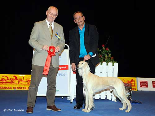 FCI group X - Winners of the International Dog Show Malmö (Sweden) 28-29 March 2015