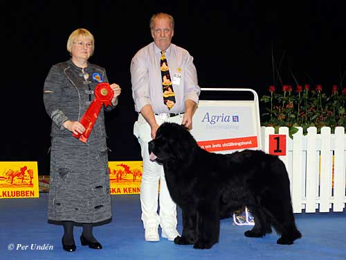 FCI group II - Winners of the International Dog Show Malmö (Sweden) 28-29 March 2015