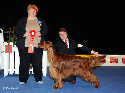 FCI group VII - Winners of the International Dog Show Malmö (Sweden) 28-29 March 2015
