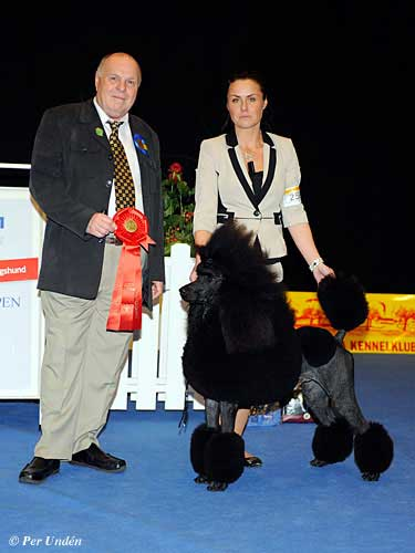 FCI group IX - Winners of the International Dog Show Malmö (Sweden) 28-29 March 2015
