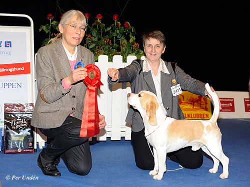 FCI groups IV / VI - Winners of the International Dog Show Malmö (Sweden) 28-29 March 2015