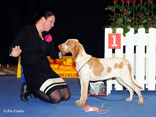 Best Puppy 28 March 2015, Saturday - Winners of the International Dog Show Malmö (Sweden) 28-29 March 2015