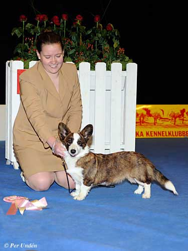 Best Puppy 29 March 2015, Sunday - Winners of the International Dog Show Malmö (Sweden) 28-29 March 2015