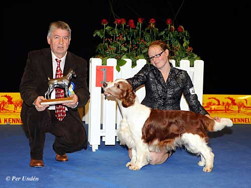 Best Veteran, 28 March 2015, Saturday - Winners of the International Dog Show Malmö (Sweden) 28-29 March 2015
