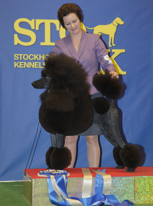 FCI group IX - Winners of the Stockholm International Easter Dog Show, 3-5 April 2015