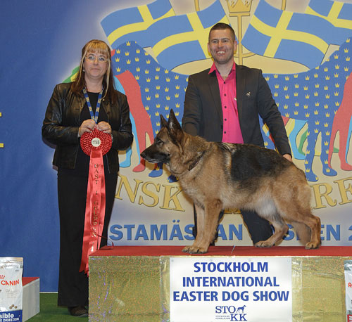 FCI group I - Winners of the Stockholm International Easter Dog Show, 3-5 April 2015