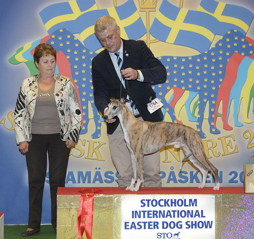 FCI group X - Winners of the Stockholm International Easter Dog Show, 3-5 April 2015