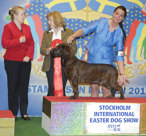 FCI group IV and VI - Winners of the Stockholm International Easter Dog Show, 3-5 April 2015
