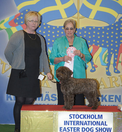 Best Puppy (Saturday, 4 April 2015) - Winners of the Stockholm International Easter Dog Show, 3-5 April 2015