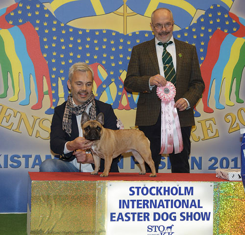 Best Puppy (Sunday, 5 April 2015) - Winners of the Stockholm International Easter Dog Show, 3-5 April 2015