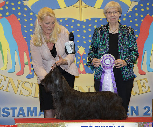 Best Veteran (Friday, 3 April 2015) - Winners of the Stockholm International Easter Dog Show, 3-5 April 2015