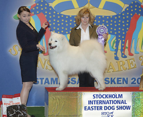 Best Veteran (Saturday, 4 April 2015) - Winners of the Stockholm International Easter Dog Show, 3-5 April 2015