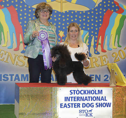 Best Veteran (Sunday, 5 April 2015) - Winners of the Stockholm International Easter Dog Show, 3-5 April 2015
