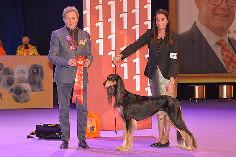 Best Veteran (Saturday, 12 December 2015) - Winners of the International Dog Show «Hundmässa 2015» (Stockholm, Sweden), 12-13 December 2015 (BIS photo)
