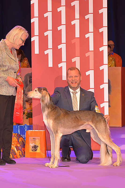 FCI group X - Winners of the International Dog Show «Hundmässa 2015» (Stockholm, Sweden), 12-13 December 2015 (BIS photo)