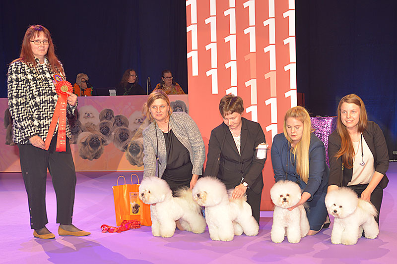 Best Breeders' Group (Saturday, 12 December 2015) - Winners of the International Dog Show «Hundmässa 2015» (Stockholm, Sweden), 12-13 December 2015 (BIS photo)