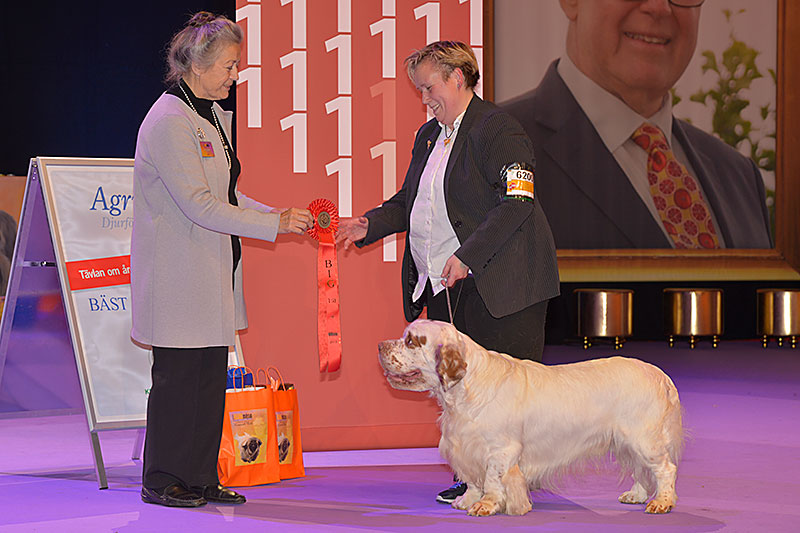 FCI group VII - Winners of the International Dog Show «Hundmässa 2015» (Stockholm, Sweden), 12-13 December 2015 (BIS photo)
