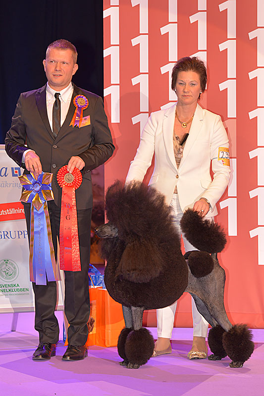 FCI group IX - Winners of the International Dog Show «Hundmässa 2015» (Stockholm, Sweden), 12-13 December 2015 (BIS photo)