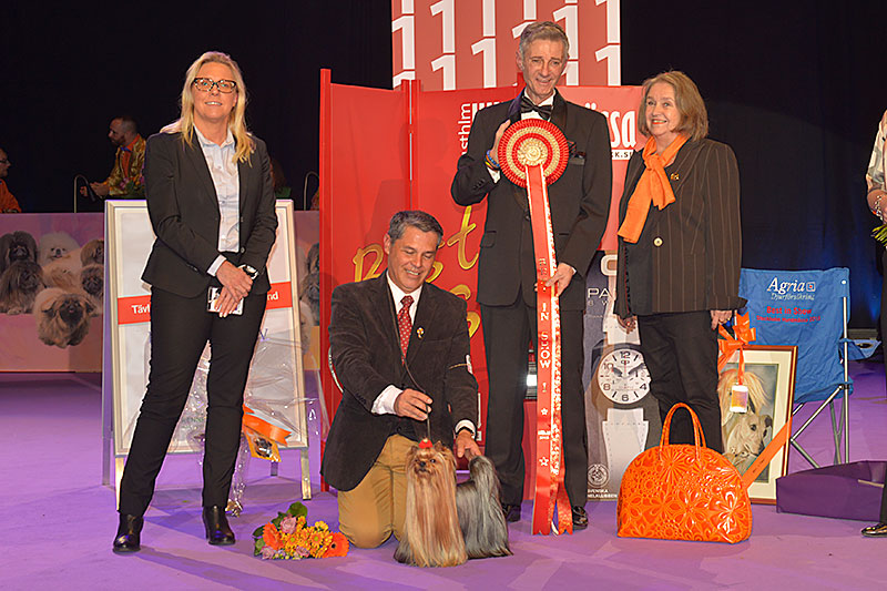 Best in Show (BIS) - Winners of the International Dog Show «Hundmässa 2015» (Stockholm, Sweden), 12-13 December 2015 (BIS photo)