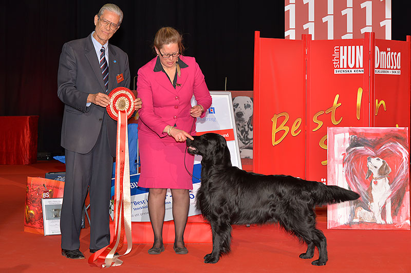 «Swedish Winner 2016» (Stockholm), 3 - 4 December  - Best Dogs of the Year 2016