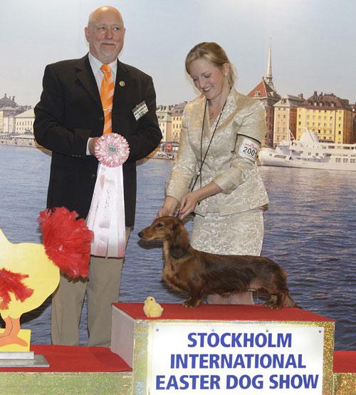 avkopplande tik leksaks show i Stockholm