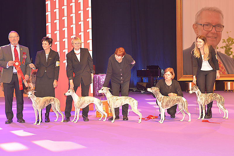 Best Progeny (Saturday, 12 December 2015) - Winners of the International Dog Show «Hundmässa 2015» (Stockholm, Sweden), 12-13 December 2015 (BIS photo)