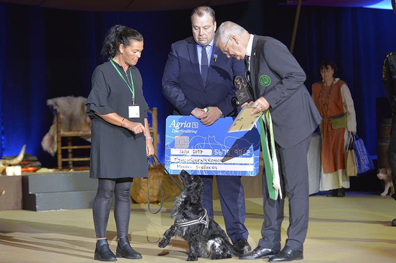 Årets bragdhund 2017