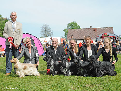 Best Progeny (Sunday, 22 May 2016) - BIS CACIB Hässleholm (Sweden), 21- 22 May 2016 (photo)