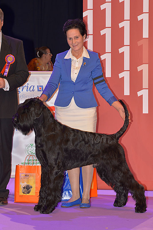 FCI group II - Winners of the International Dog Show «Hundmässa 2015» (Stockholm, Sweden), 12-13 December 2015 (BIS photo)