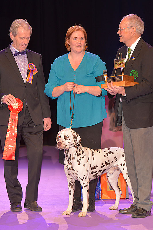 FCI group IV and VI - Winners of the International Dog Show «Hundmässa 2015» (Stockholm, Sweden), 12-13 December 2015 (BIS photo)