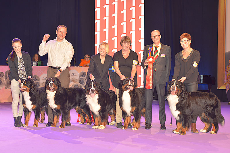Best Progeny (Sunday, 13 December 2015) - Winners of the International Dog Show «Hundmässa 2015» (Stockholm, Sweden), 12-13 December 2015 (BIS photo)