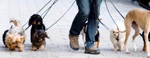 Image result for Vad är ett hundpensionat?