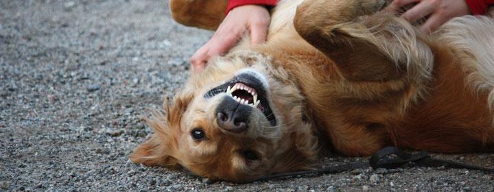 ägarbyte hund