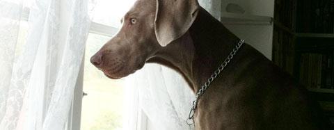 Hur länge får en hund vara ensam enligt lag