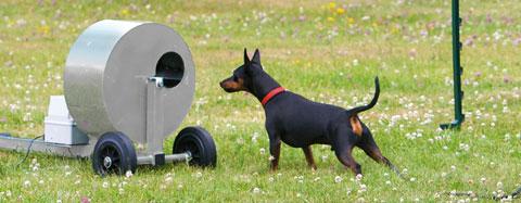 Beteende- och personlighets-beskrivning hund – BPH