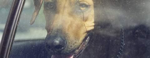 Hund som förvaras olämpligt