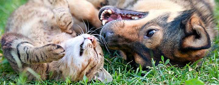 försäkra katt agria