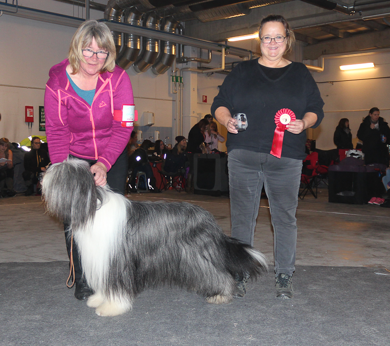BIG-1 Bearded Collie: Farmarens Qualificated Beauty, Äg: Eva Toresson