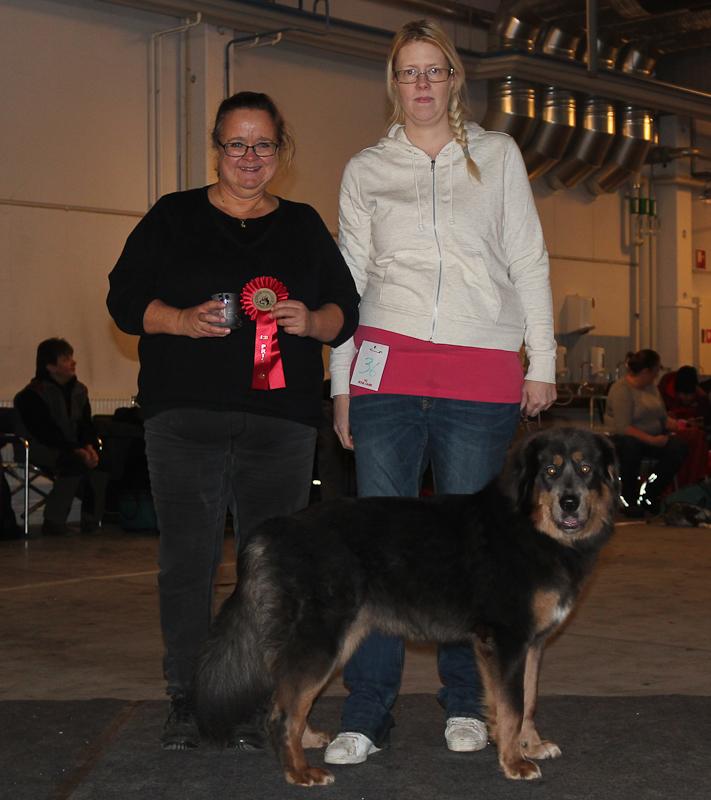 BIG-1 Tibetansk Mastiff: Mimayin Keyuri, Äg: Angelika Eriksson