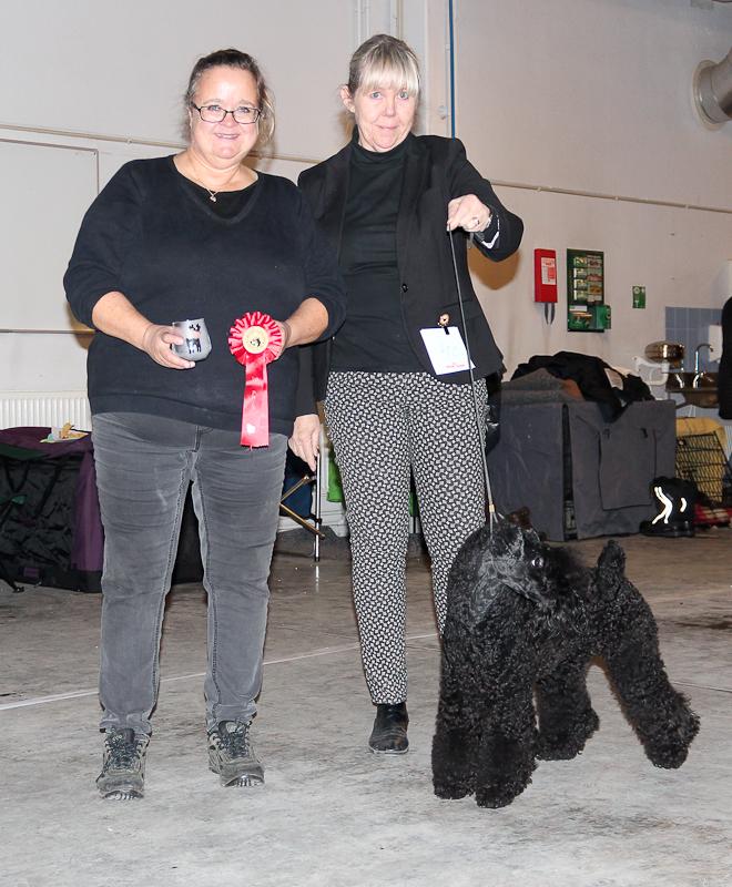 BIG-1 Kerry Blue Terrier: Shyloch Tango, Äg: Lena Pålsson