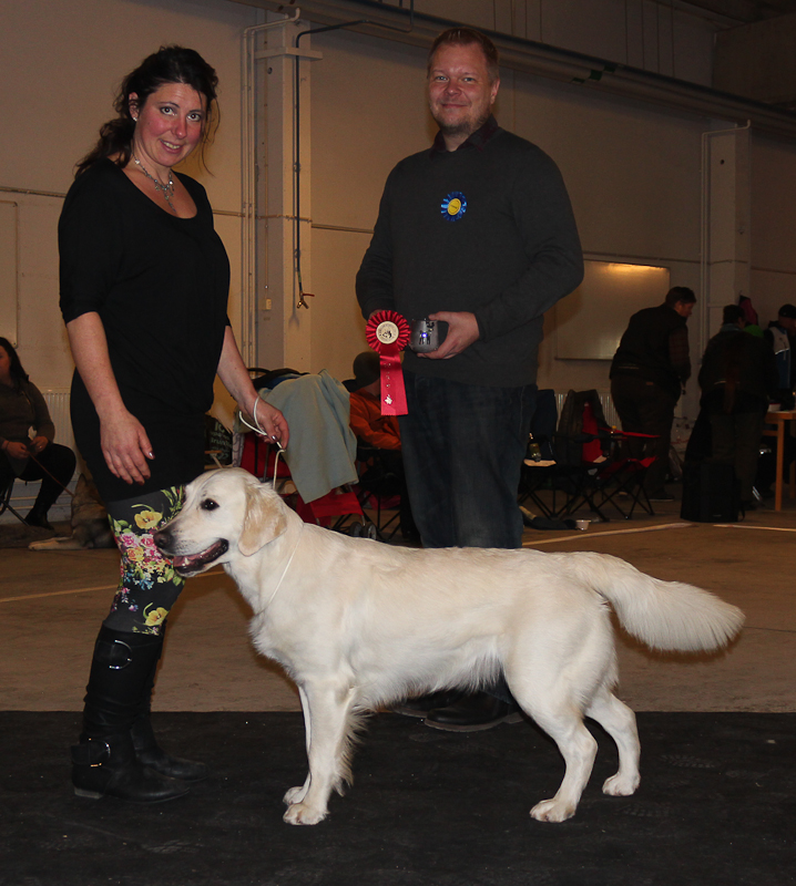 BIG-1 Golden Retriever: Nakondisi's Sabrina The Witch, Äg: Katarina Olofsson