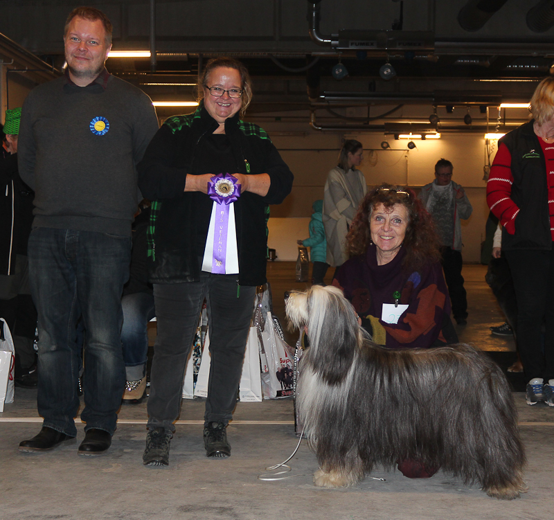 BIS-1 Veteran, Bearded Collie: Beardmarked's Run For Fun, Äg: Thérèse Juel